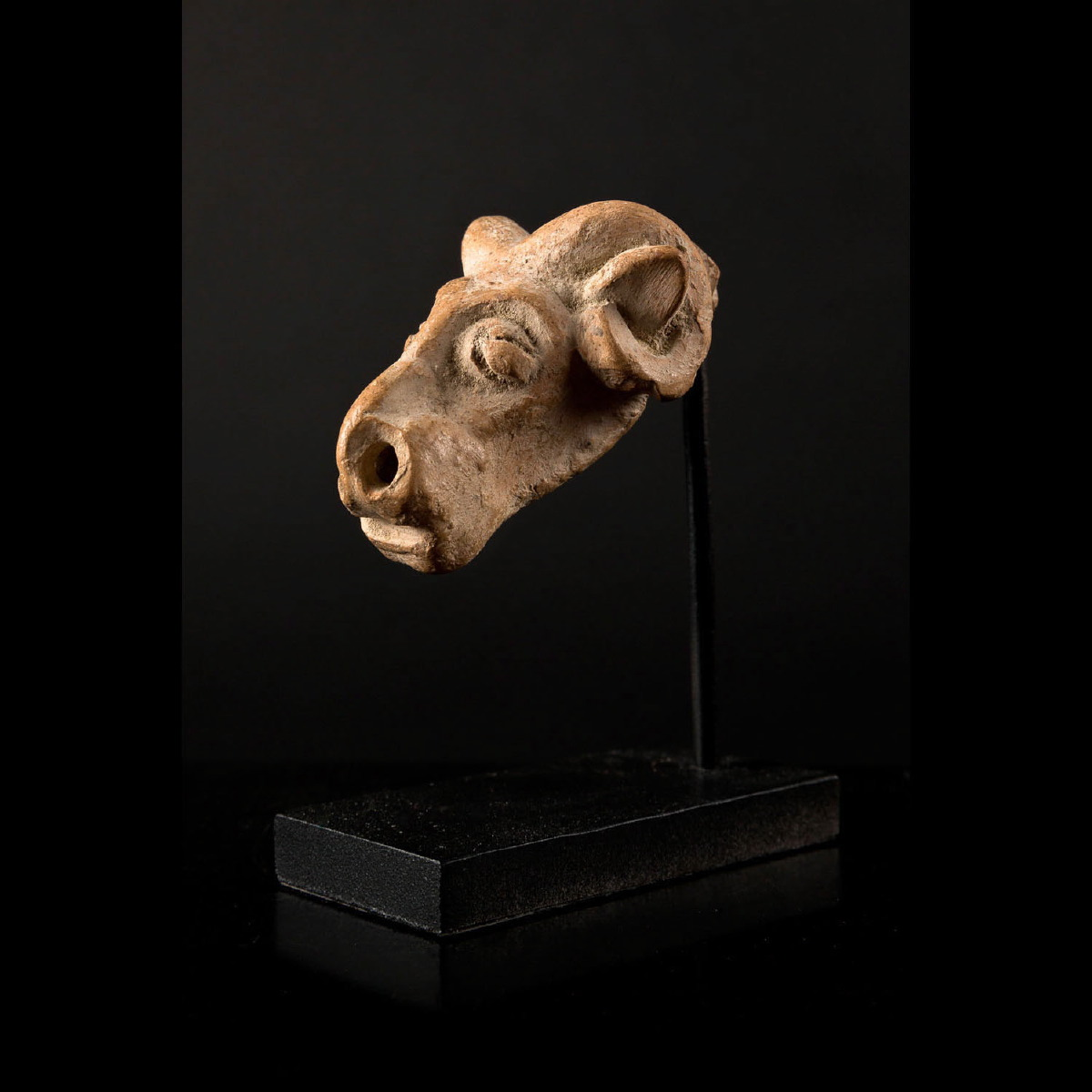 Photo of RAM'S HEAD FROM INDUS VALLEY
