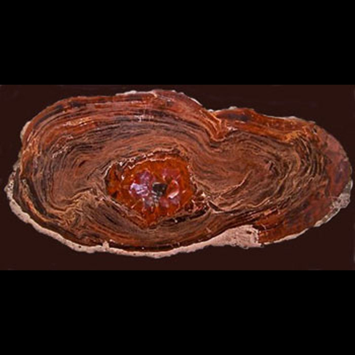 Photo ofPETRIFIED WOOD FROM ARIZONA