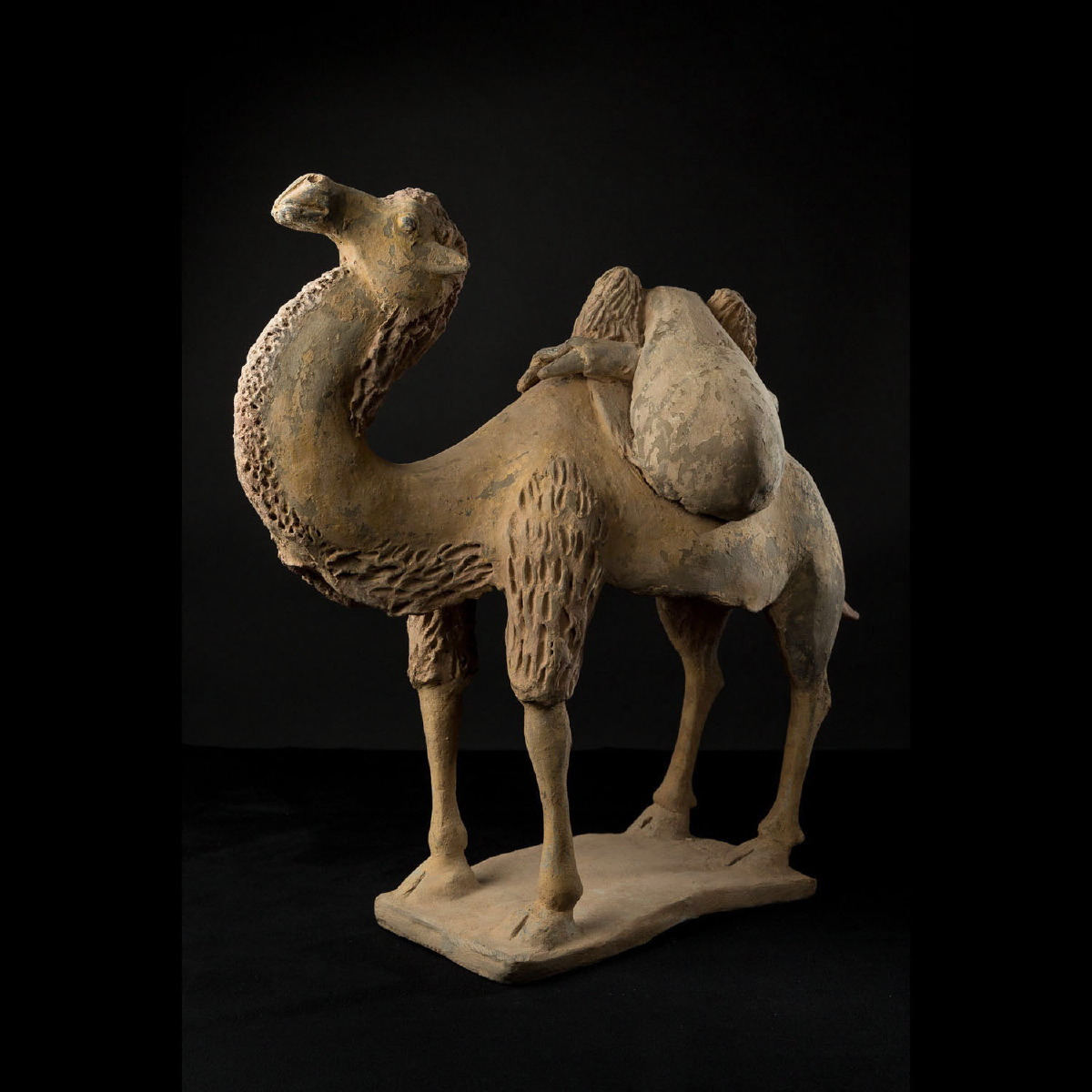Photo ofBACTRIAN CAMEL
